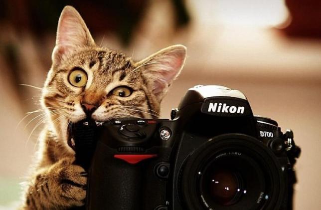 fotograf-satarak-para-kazanmak-644x421